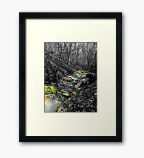 Babbling Brook of Color Framed Print