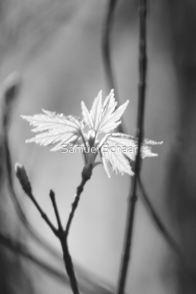 Shadow Blossom by Samuel Schaar