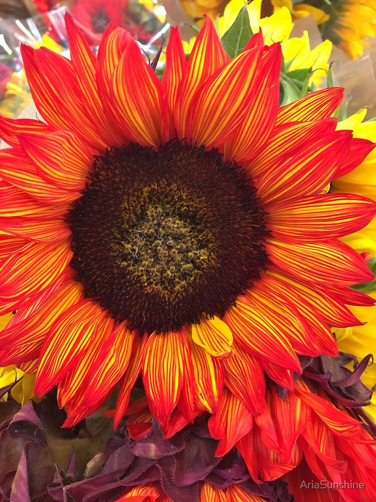 Fire sunflower  by AriaSunshine