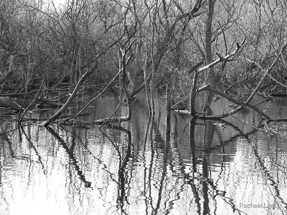 Reflections 1 by Rachael Lynch