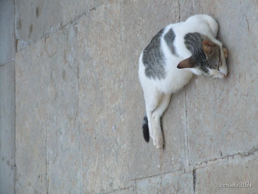 Sleeping Cat by loosielu9154