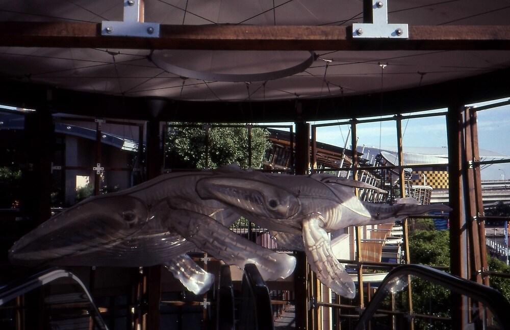 Whale Sculptures,Darling Harbour,NSW,Australia 2002 by muz2142