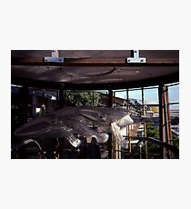 Whale Sculptures,Darling Harbour,NSW,Australia 2002 Photographic Print