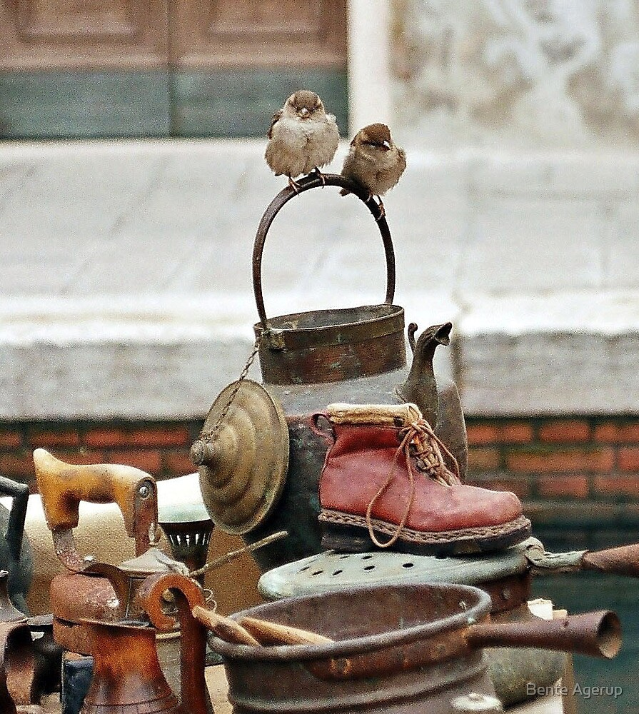 Sparrows in Venice by Bente Agerup