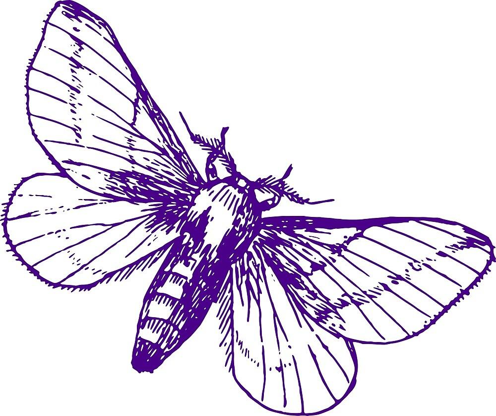 Maple moth by pereirashop