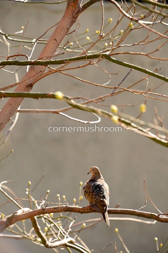 Bird by Cindy Lin
