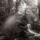 Rainforest, Tasmania by Andrew Smyth