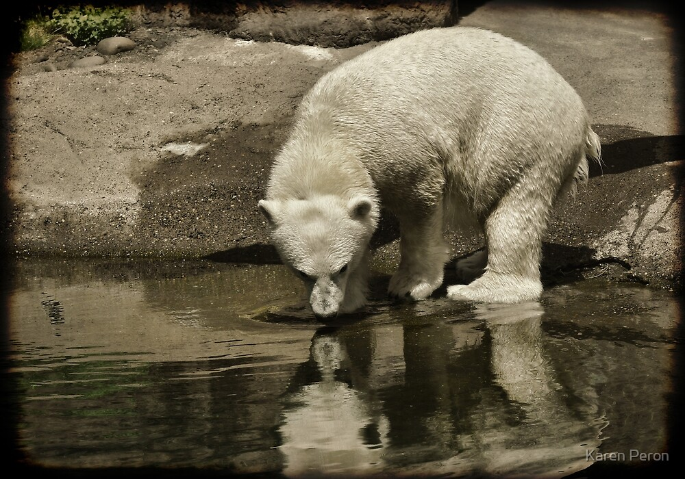 Polar Reflection  by Karen Peron