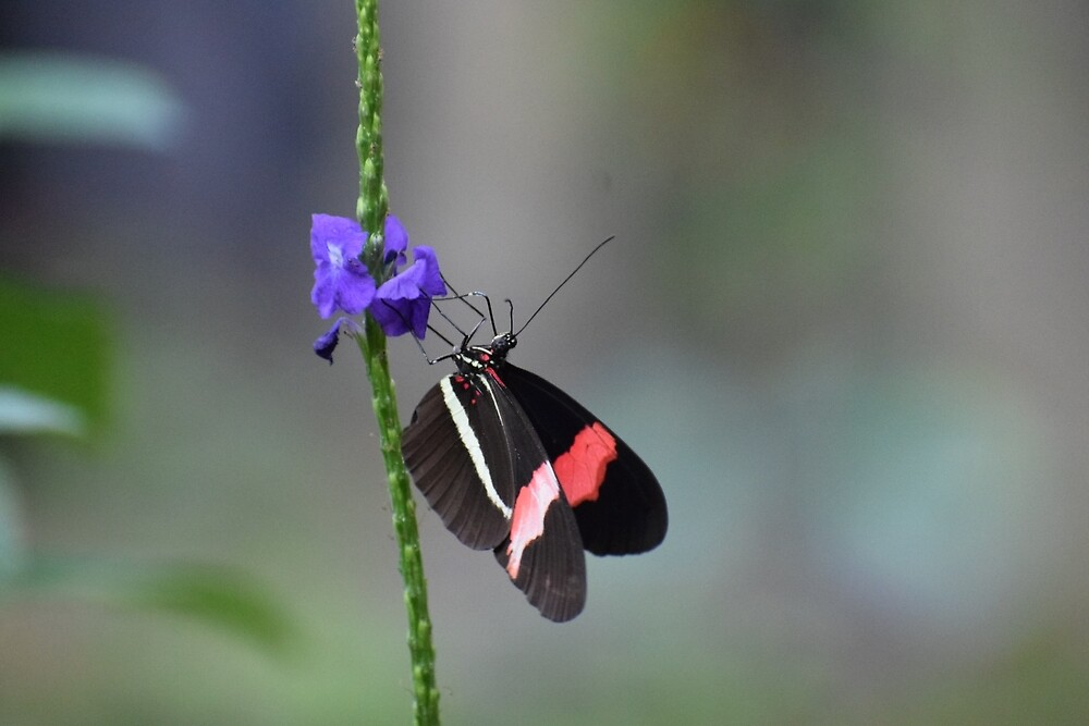 Butterfly on Purple Flower by BHighland