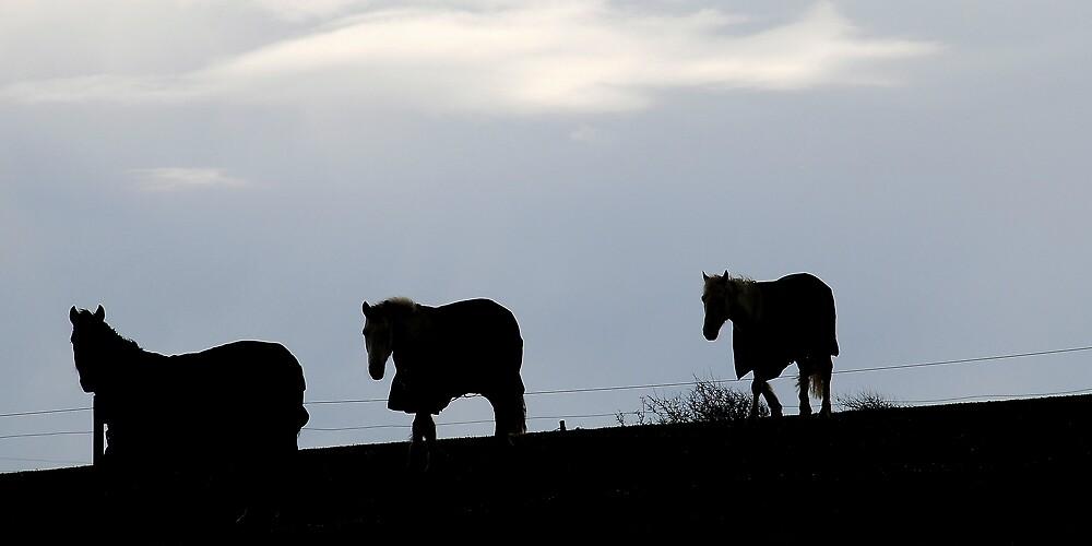 Sunset Horses by Cristian  Doolan