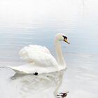 Like a White Cloud by Mui-Ling Teh