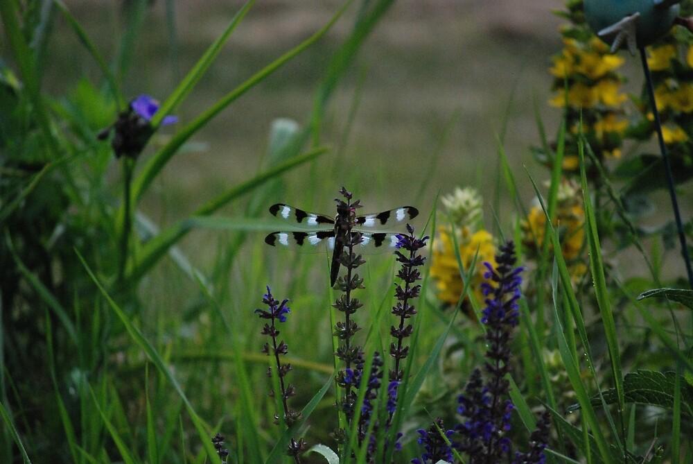 Dragonfly in Field by BHighland