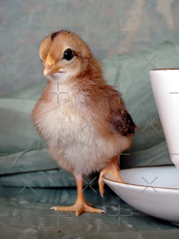 Bantam Chick by angelandspot