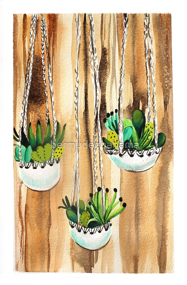 Hanging Succulents by bermudezbahama