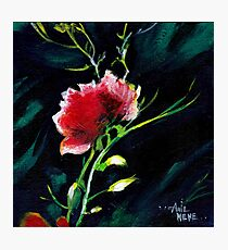 Red Flower New Photographic Print