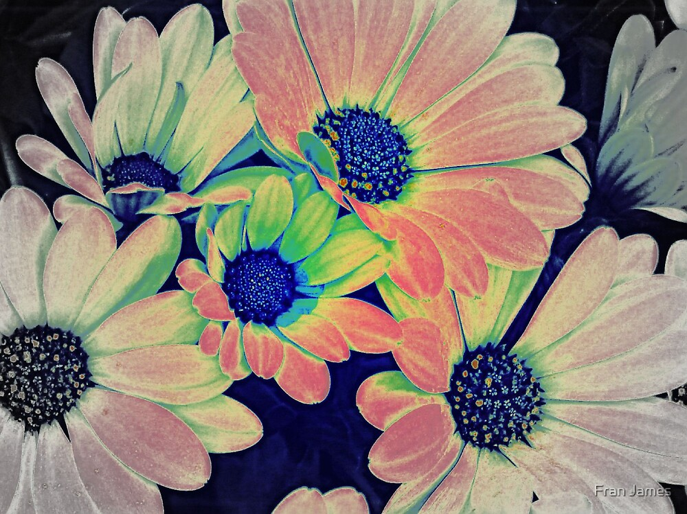 COLORED DAISIES by Fran James