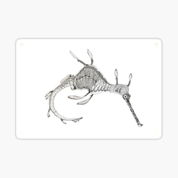 Weedy seadragon ink drawing - Phyllopteryx taeniolatus Sticker