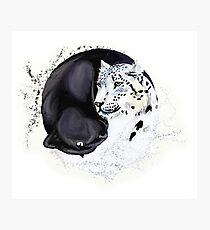 Snow Leopard & Panther Balance Photographic Print