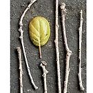 Leaf and Twigs by ANewKindOfWater