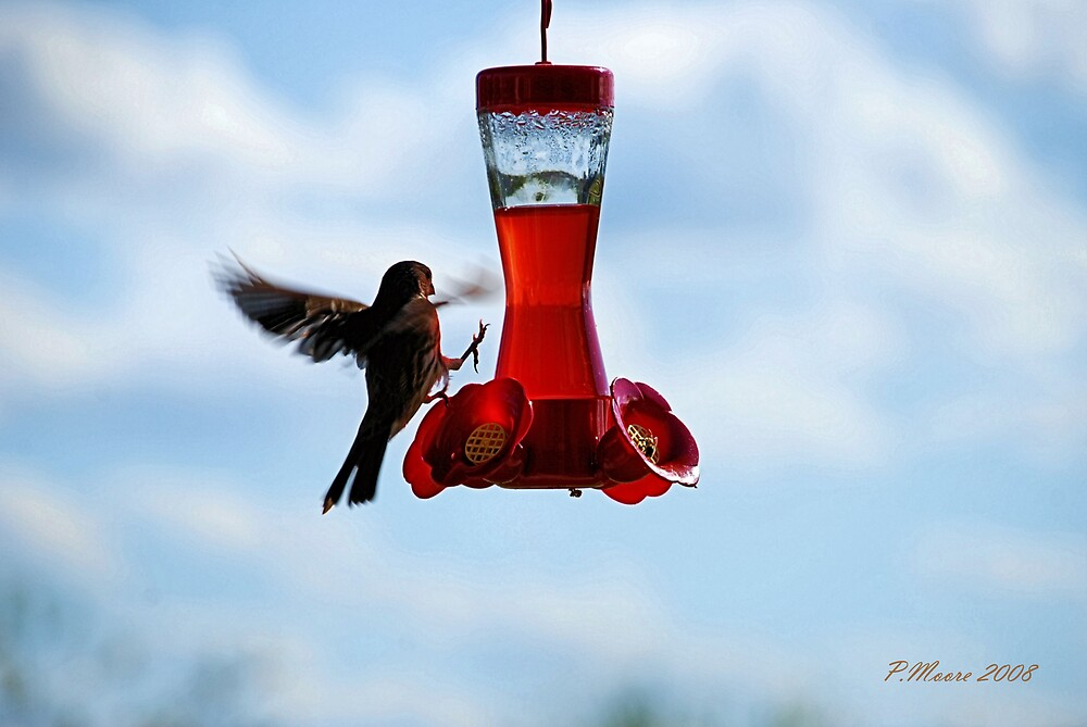 I Want to be a Hummingbird by Pat Moore