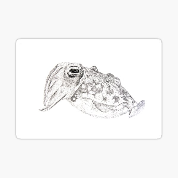Red cuttlefish ink drawing - Sepia mestus Sticker