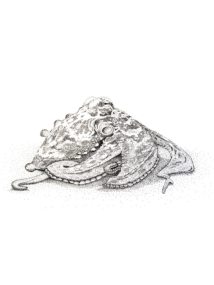 Sydney octopus ink drawing - Octopus tetricus by jwturnbull