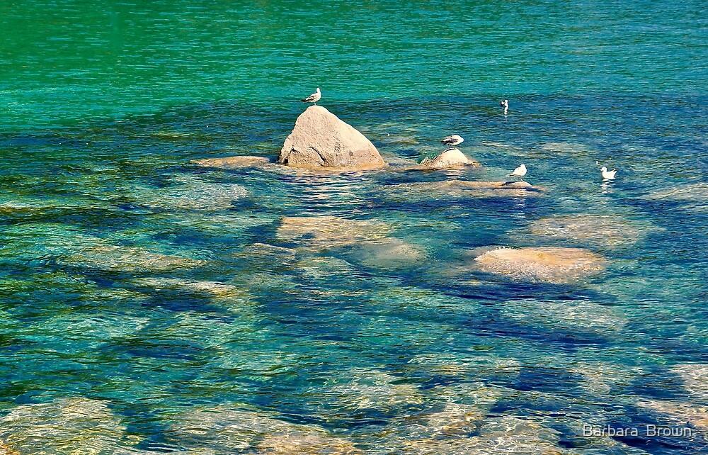 Tahoe Impressionism by Barbara  Brown