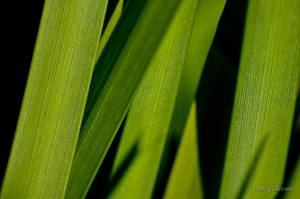 Grass #2 by Harry Dinnen
