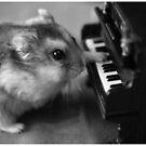 Mozart by Maartje de Nie