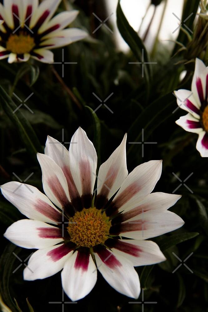 Flowers in summer by VanGalt