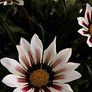 Blumen im Sommer von VanGalt