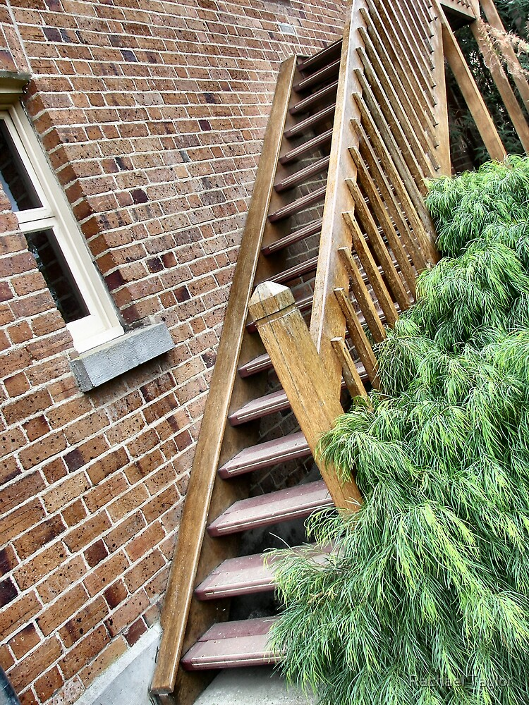 Wooden Stairway by Rachael Taylor