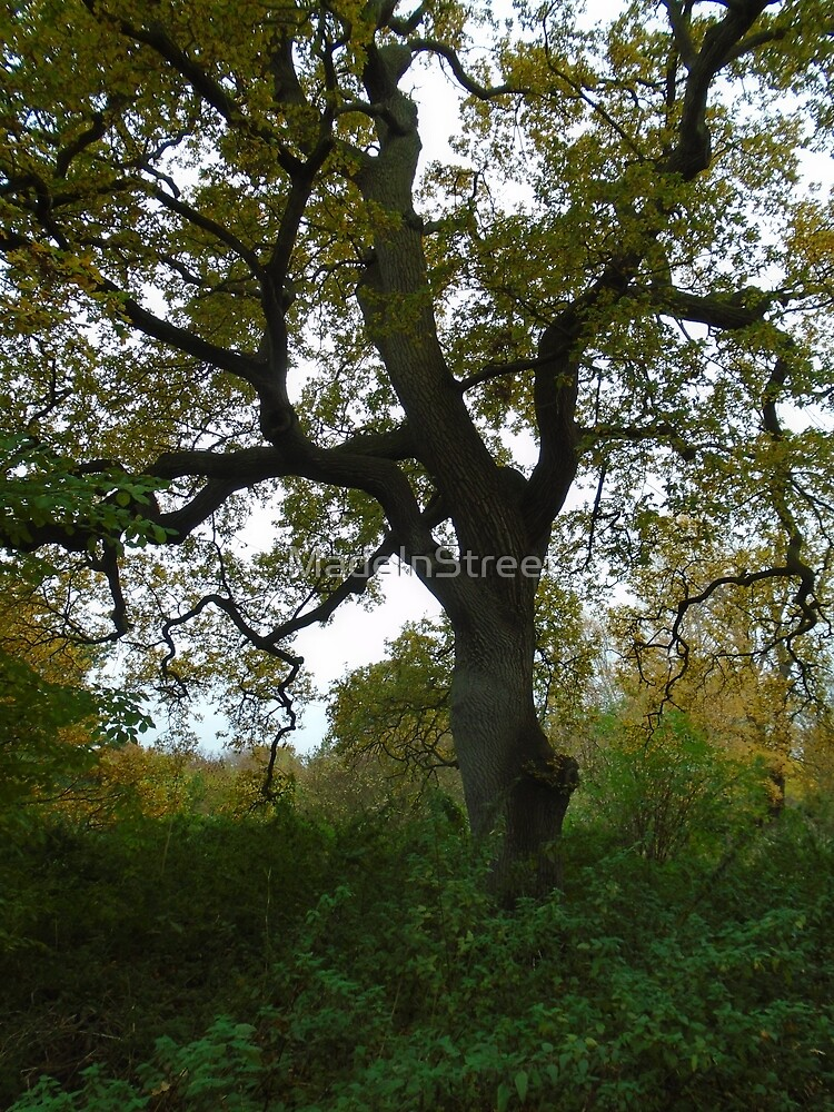 oak tree at Glastonbury Abbey grounds by Karen Chard