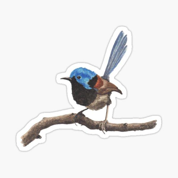 Fairy Wren Sticker