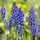 Tiny Blue Flowers by Dave Hare