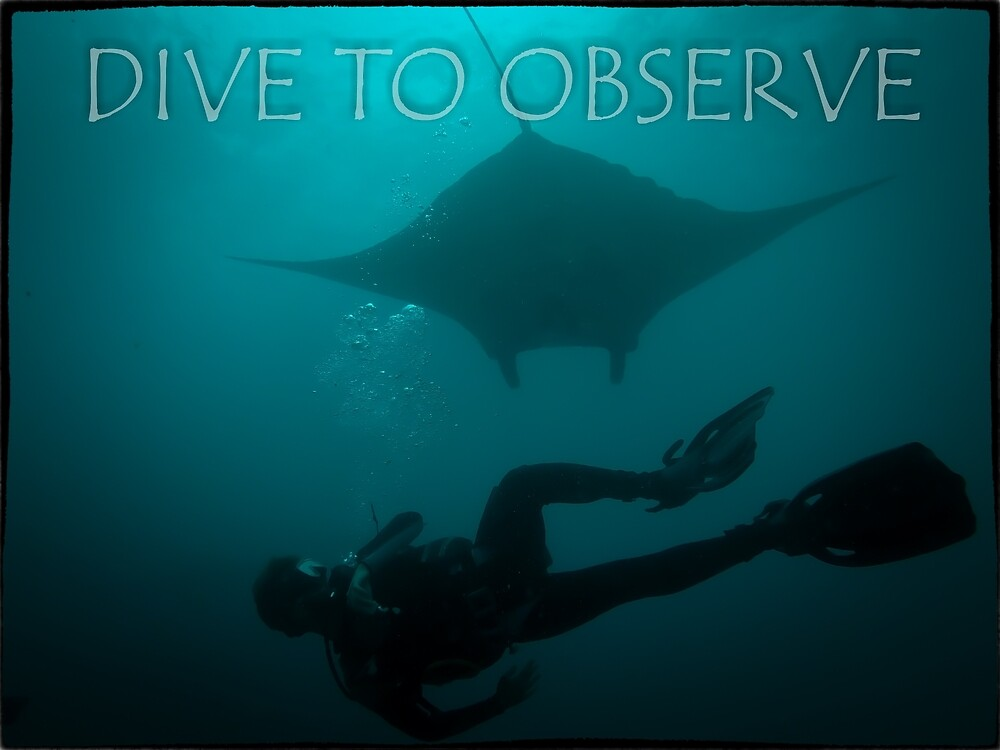 Dive to Observe by matideambrosi