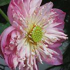 Queen Lotus by DAdeSimone