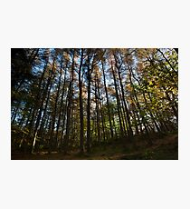 autumn colours, tollohill woods Photographic Print