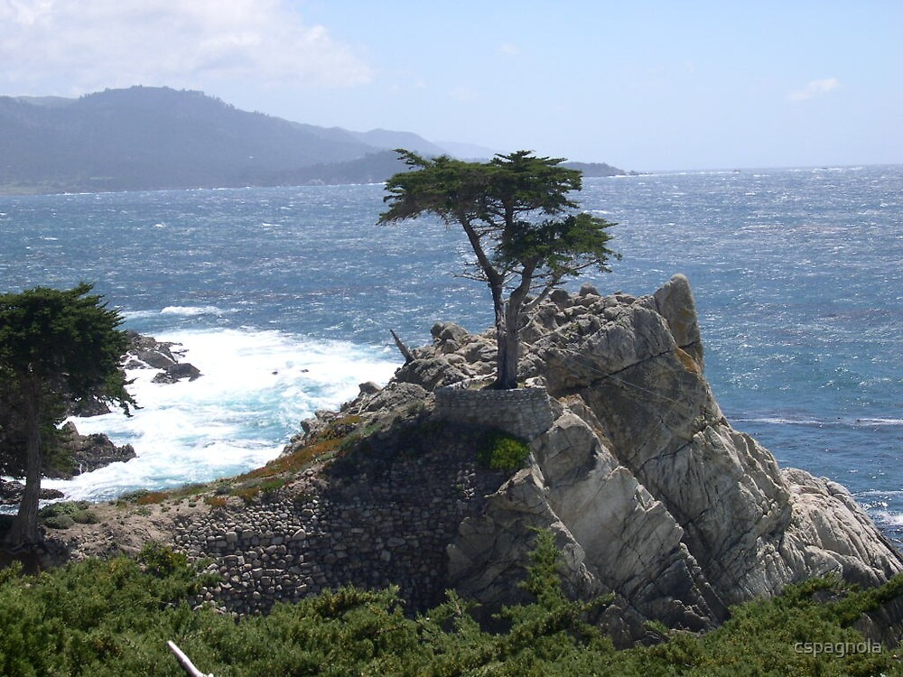 The Lone Cypress by cspagnola