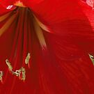 Flower by Tokay