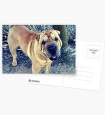 Shar Pei Postcards