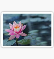 Pink water lily Sticker