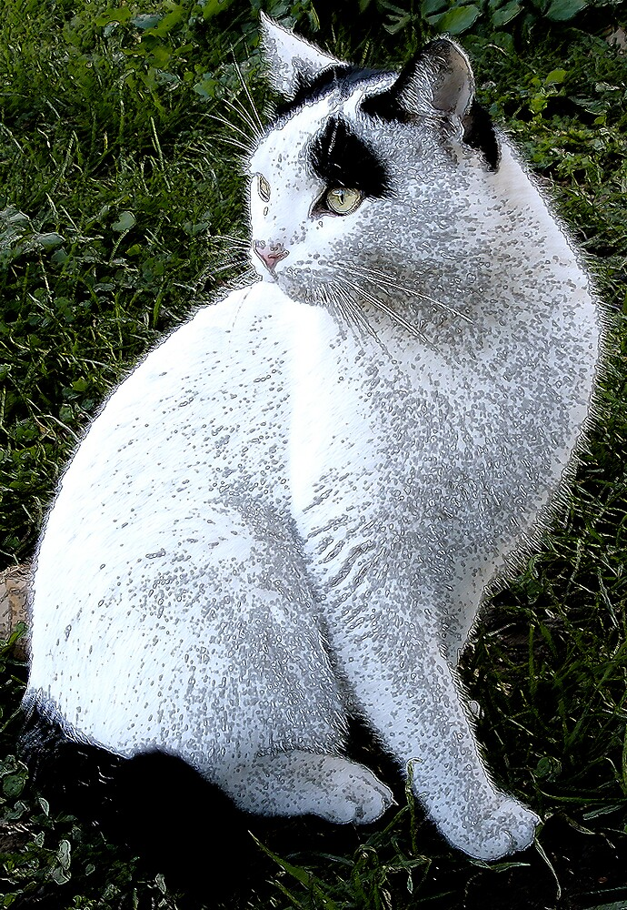 A white cat with black marks by nikib