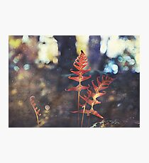 Botanica Photographic Print