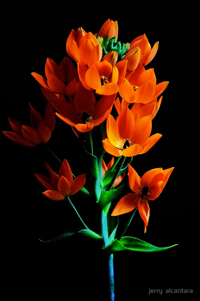 Simply Orange by jerry  alcantara