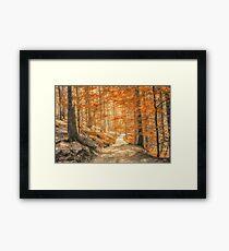 Autumn forest leaves Framed Print