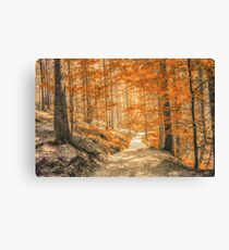 Autumn forest leaves Canvas Print