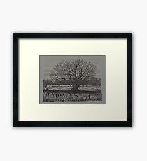 Old Tree - www.jbjon.com Framed Print