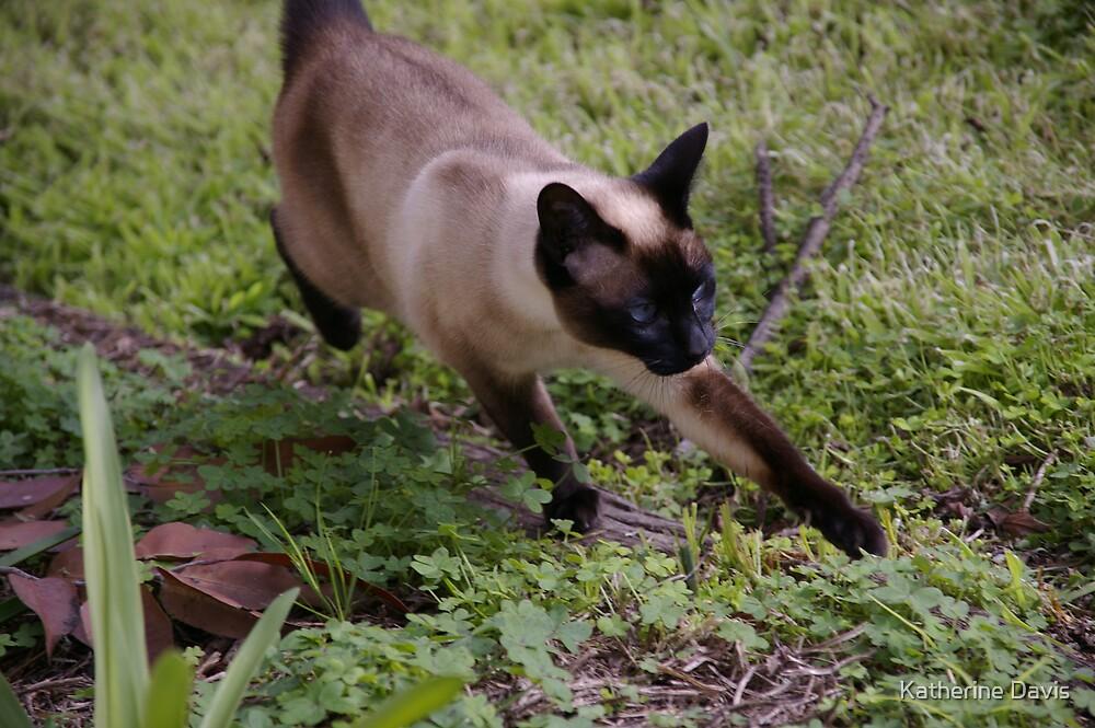 Curious Kitty by Katherine Davis