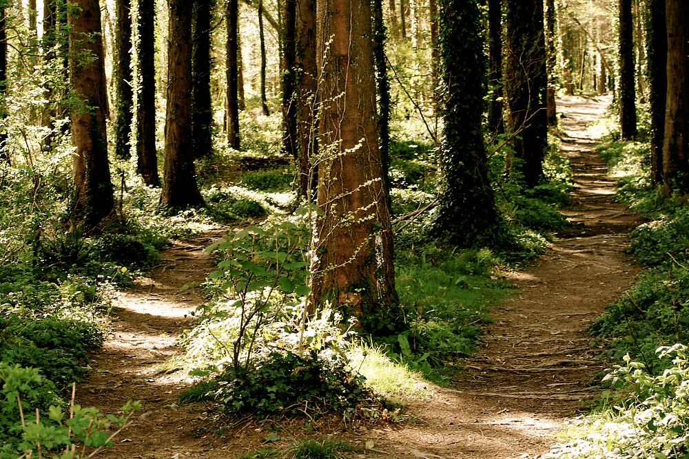 Two roads diverge in a wood, and I..... by David Burke